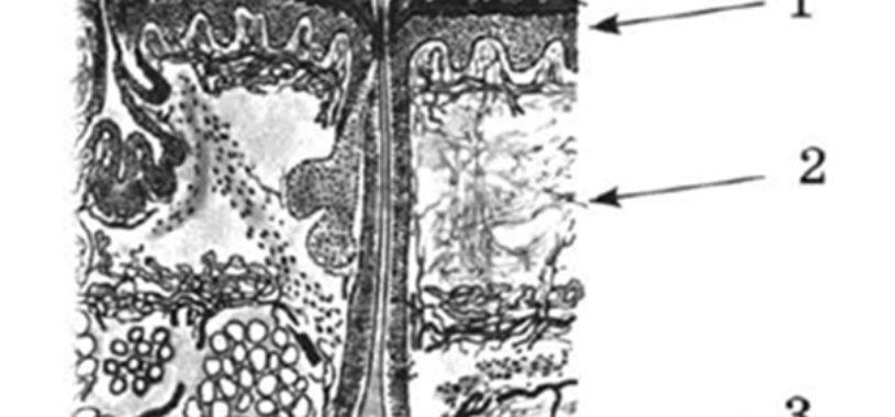 Структуры кожи человека