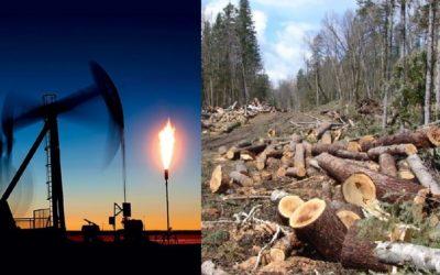 Каким образом человек влияет на круговорот углерода в природе