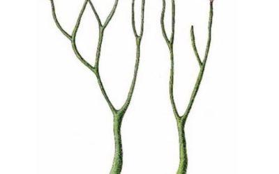 Почему с освоением наземно-воздушной среды у растений появились органы и ткани?