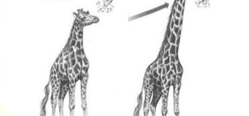 В чем заключается ошибочность ламаркистской теории эволюции?